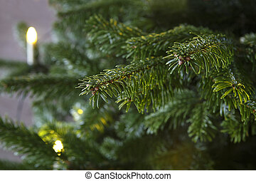 Closeup of a green Christmas tree with lights