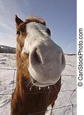 Closeup of a horse in winter