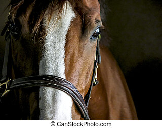 Closeup of a Horse