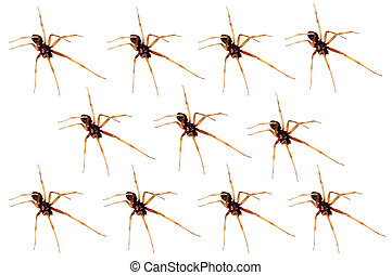 closeup of a house spider