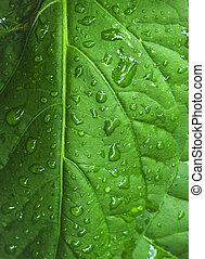 Closeup of a leaf saturated with rain