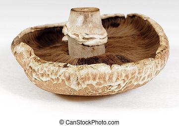Portabello mushroom - CLoseup of a Portabello mushroom with...