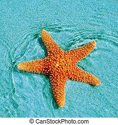 seastar - closeup of a seastar in a tropical beach