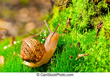 Closeup of a snail in its envirenment