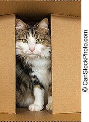 tabby cat hiding in cardboard box