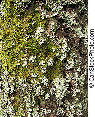 a tree bark texture with moss