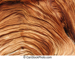 closeup of a twisted and swirled wood texture from a pine tree root