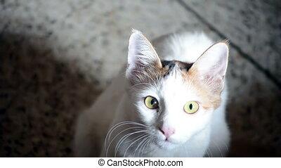 Closeup of a young cat