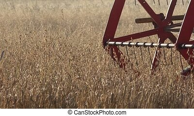 Closeup of agricultural combine machine with reel and cutter bar threshing oats. Panorama. 4K