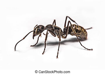 closeup of ants on a white background
