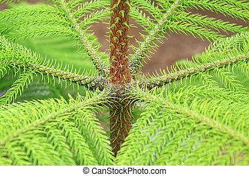 closeup of araucaria stalk in the wild