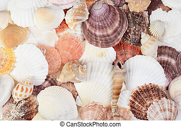 closeup of assorted seashells background