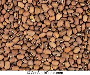 Closeup of Australian red beans background texture