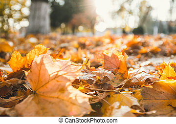 Closeup of autumn leaves on the ground in a forest