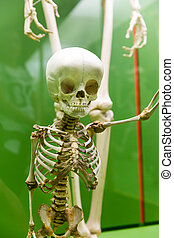 Closeup of baby skeleton in museum. - Closeup of baby...