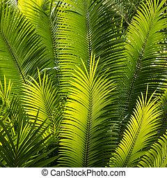 closeup of backlit palm fronds - closeup of backlit palm...