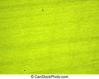 closeup of banana leaf texture, green and fresh, in a park