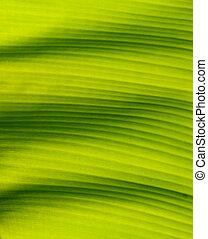 closeup of banana leaf texture