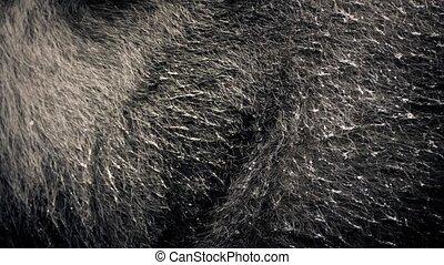 Closeup Of Bear Fur Moving Around - Matted wet bear fur...