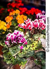 closeup of beautiful flower in garden
