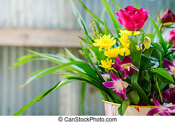closeup of beautiful flower in pot