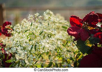 Closeup of beautiful white flower in the garden