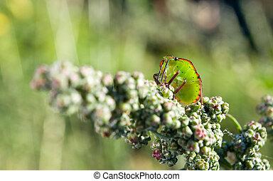closeup of bedbug on the vegetation