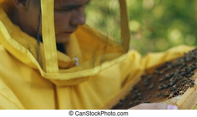 Closeup of beekeeper man checking wooden frame before harvesting honey in apiary