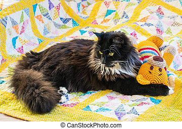 black kitten lying with teddy bear on colourful quilt cover