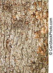 closeup of brown bark texture