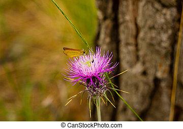 Closeup of Carduus plant flower - Closeup of Carduus flower...