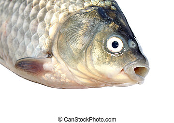 carp head featured in white background