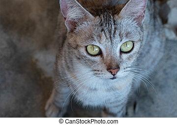 Closeup of cat face