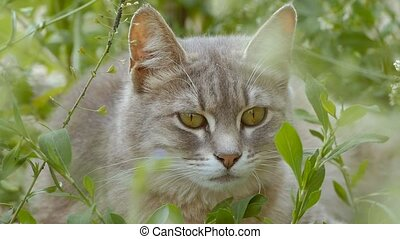 closeup of cat muzzle slow motion video - closeup of a...