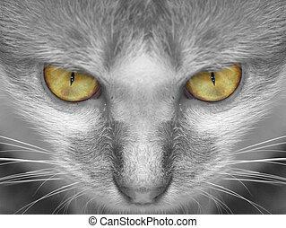 Cat - Closeup of Cat\\\'s Facial Feature
