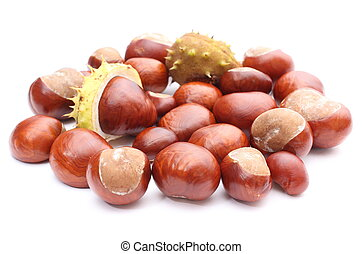 Closeup of chestnut on white background