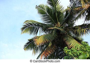 closeup of coconut trees under blue sky
