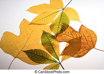 Closeup of colorful autumn leaves
