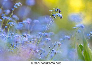 Closeup of colorful tender spring flowers blooming in green park.
