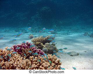Closeup of Coral - Closeup photo of coral and small fish ...