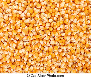 Close up of corn grains. Whole background.