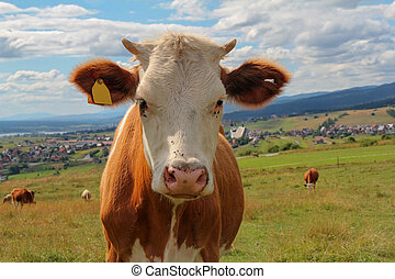 closeup of cow in meadow