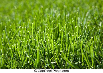 Closeup of cut grass