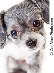 Closeup of Cute Little Crossbreed Dog