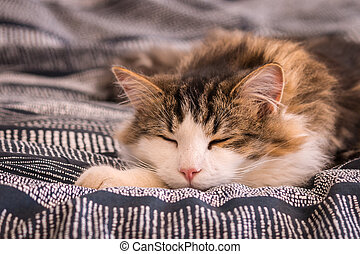 cute tabby cat resting happily on bed