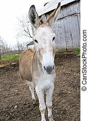 Closeup of donkey