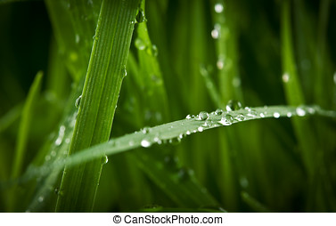 closeup of drops on green grass
