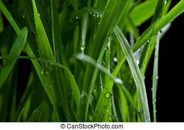 closeup of drops on green grass