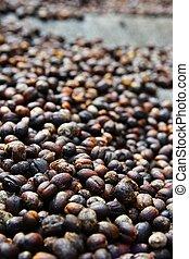 Closeup of drying coffee cherries 1/2