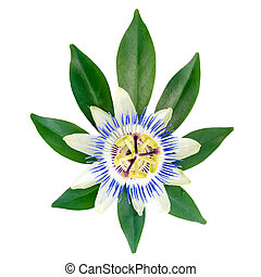 closeup of exotic passion flower on the leaf is isolated on whit